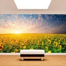 Tournesols de peintures murales pour le mur photo