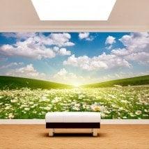 Photo mur murales fleurs marguerites blanches