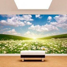 Photo mur murales fleurs Daisy blanc