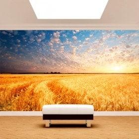 Photo mur murales couchers de soleil sur le terrain
