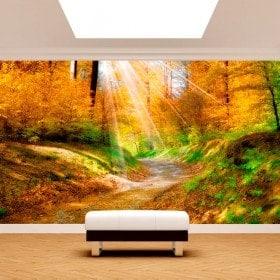 Peintures murales photo sentier dans la nature