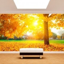 Photo mur murales arbres en automne
