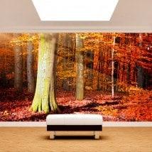Automne des arbres Fotomural