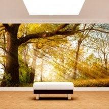 Peintures murales photo arbre nature