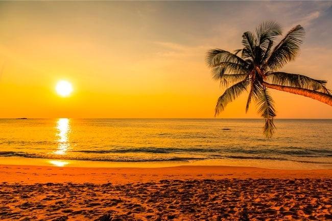fonds d 39 cran palmier coucher de soleil plage. Black Bedroom Furniture Sets. Home Design Ideas