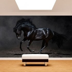 Fotomural noir cheval