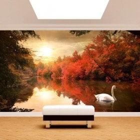 Peintures murales photo cygne sur le lac