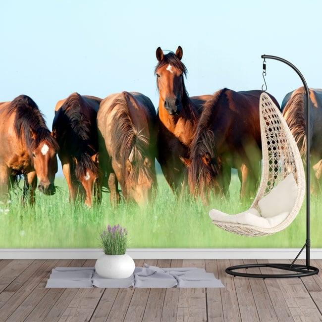 Papiers peints en vinyle chevaux dans le domaine