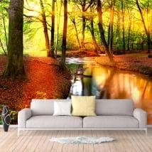Papiers peints coucher de soleil dans la forêt en automne