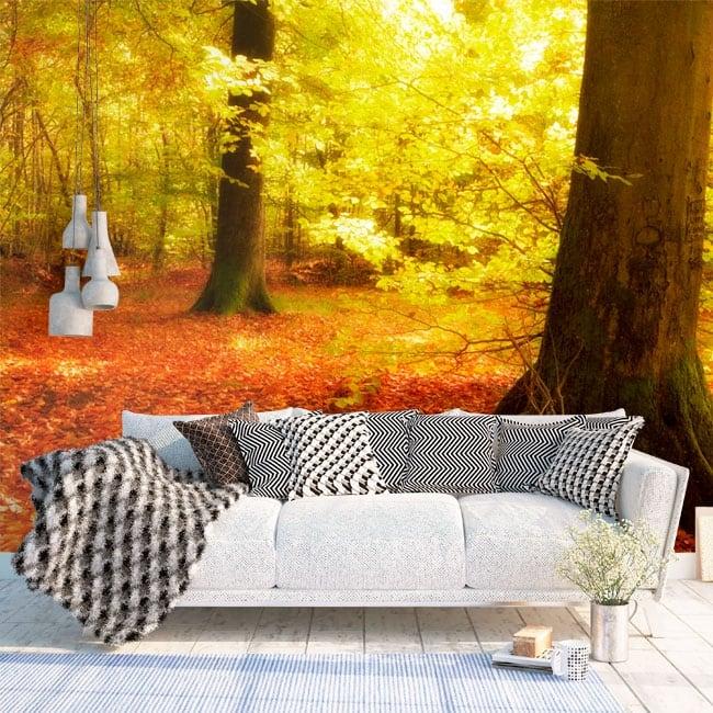 Papiers peints arbres dans la forêt d'automne