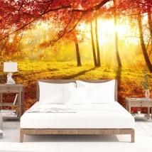 Papiers peints arbres coucher de soleil automne