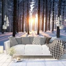 Papiers peints arbres au coucher du soleil hiver