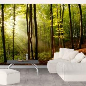 Papiers peints arbres forêt coucher de soleil