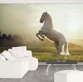 Papiers peints vinyle cheval blanc