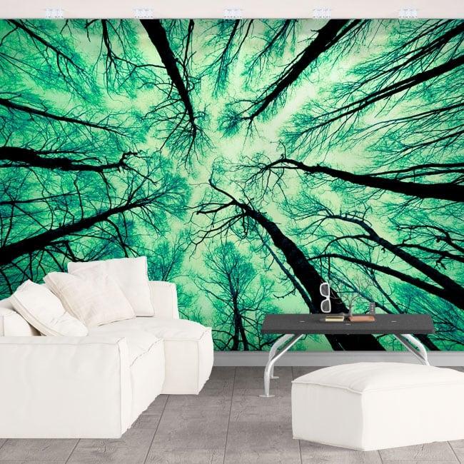 Papiers peints arbres forestiers