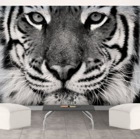 Papiers peints de vinyle tigre