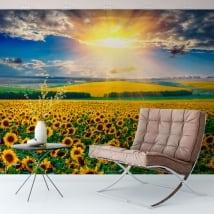 Peintures murales coucher de soleil champ de tournesols