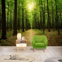 Murales arbres dans la forêt