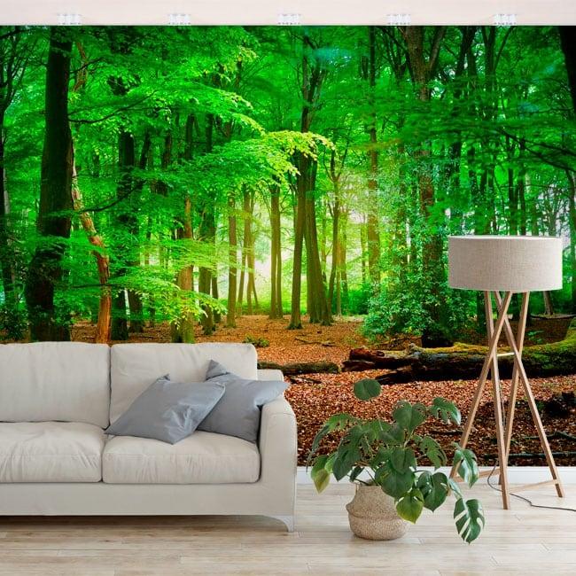 Murales de vinyle arbres dans la forêt