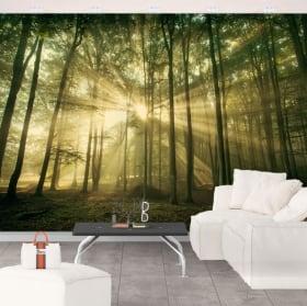 Murales de vinyle coucher de soleil dans la forêt