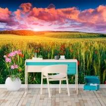 Peintures murales coquelicots sur le terrain au coucher du soleil