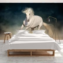 Murales adhésives cheval blanc