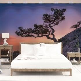Papiers peints en vinyle arbre et coucher de soleil